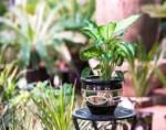 Savannah Siagon Pots SGRP005L Round Black Pot WBand Large Black Color in Pakistan
