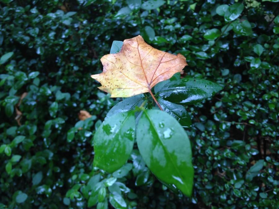 leaf-900-90.jpg