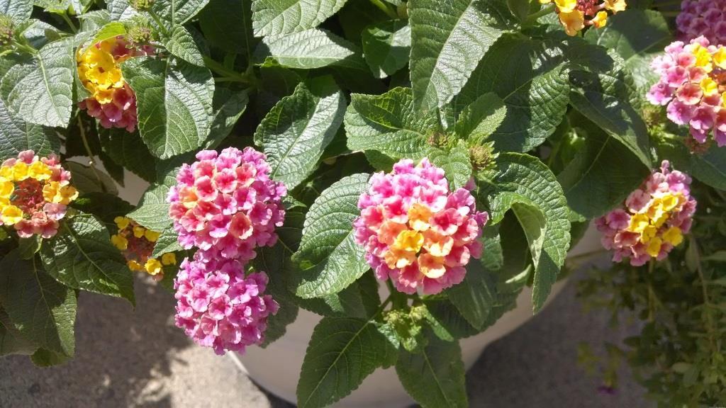 moto-x-flowers.jpg