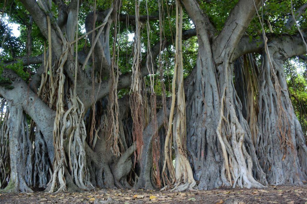 nikon-1-j4-trees.jpg
