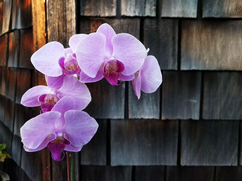 orchid.09p6oriuwe.jpg