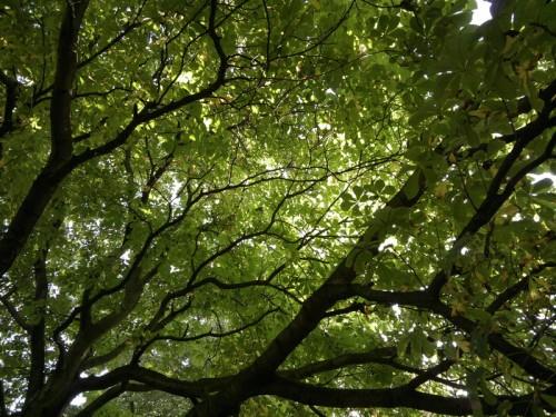 trees-03092011087sized-nokia-n8-500x375fdtsyr.jpg